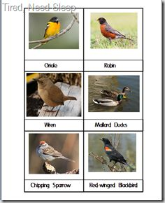 """Free printable bird cards. Great for a matching game or """"go fish"""" type card game."""