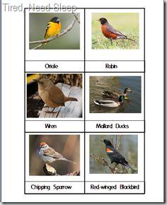 free homeschool, card printabl, homeschool prekk, birds preschool theme, bird cards