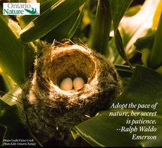 Words by: Ralph Waldo Emerson Ralph Waldo Emerson, Goldfinch, Photo Credit, Ontario, Nest, Photo Editing, Words, Nature, Nest Box