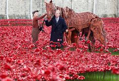 war horse poppies - Google Search