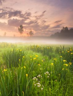 Fantasy meadow...can you hear it begging you to run out and frolick in its lush purdiness?