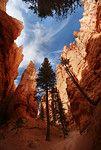 sky navajo trail bryce canyon utah