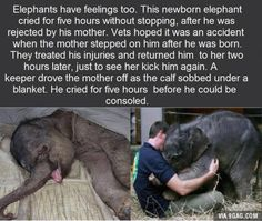 Awwwwwww, this makes me sooooo sad! I can relate to you, little elephant. If I could I would comfort you myself!<<< This matches sad more than cute, but this is the closest board I have that relates to it Baby Animals, Funny Animals, Cute Animals, Baby Elephants, Wild Animals, Funny Babies, Funny Kids, Newborn Elephant, Super Funny Memes
