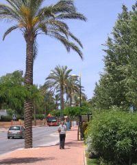 ALHAURÍN DE LA TORRE: Una joya residencial  a un paso de Málaga
