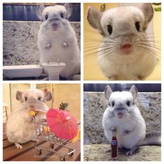 The 10 Cutest Animals on Instagram My sister is dying for that little mouse.