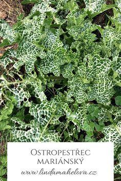 Korn, Herbalism, Herbs, Health, Catalog, Herbal Medicine, Health Care, Herb, Salud