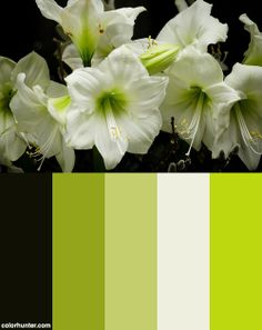 A Fanfare Of Lilies Color Scheme