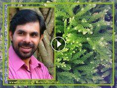 Hits Of KESTER - Manna Jaya Jaya - 2015 Malayalam Christian Song