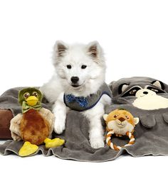 Happy National #Dog Day! Celebrate your furry friend with our #marthastewartpets fall products.