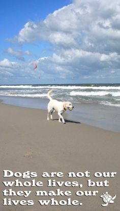 Dogs are not our whole lives, but they make our lives whole. ~ Roger Caras | so I know its not a quote about the beach, but it is a picture of the beach....