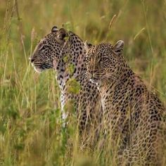 BIG CATS 8 DAYS TRIP IN KENYA