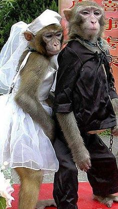Even the monkeys knows what's right! One male and one female!!