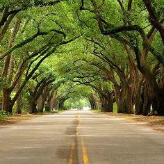 South Boundary, Aiken, South Carolina