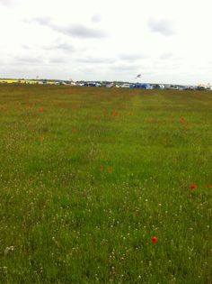 Poppy field looking onto Woodlands Campsite, Silverstone British F1 GP 2013, race day