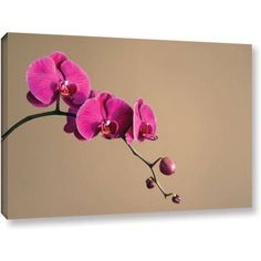 Elena Ray Magenta Orchid Gallery-Wrapped Canvas, Size: 16 x 24, Brown