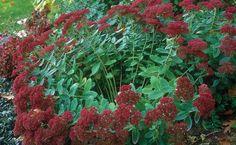 Very good tips - 10 Tips on Dividing Perennial Plants | Fine Gardening