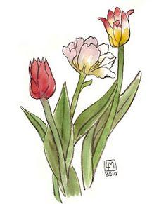 Les tulipes de mon jardin, ou plutôt, mon ancien jardin. Creations, Flowers, Plants, Gardens, Pen And Wash, India Ink, Floral, Plant, Royal Icing Flowers