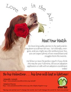 Be My Valentine! Adopt an orphaned pet, and you'll get a lifetime of love!