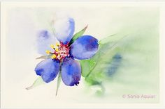 https://flic.kr/p/owfxTG   Floral Art Watercolor - Blue Pimpernel   zentacuarelas.blogspot.com.es/ I painted this delicate blue flower on a spring morning.