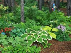 Love this woodland garden! This is a must-try