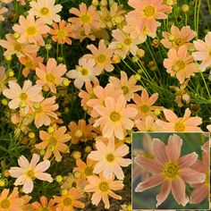 Slow-draining clay soil makes life difficult for many plants. Not to worry: these 10 plants for clay soil thrive in it. Gardening Zones, Container Gardening, Fall Plants, Garden Plants, Garden Soil, Clay Soil Plants, Beautiful Gardens, Beautiful Flowers, Apricot Blossom