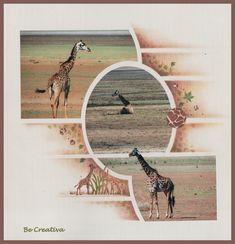 Les girafes du Manyara !