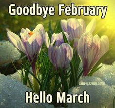 Posted to Fb Goodbye February, Hello March February Hello, Hello March Images, Hello March Quotes, February Quotes, Happy March, March Month, October Poem, Days And Months, Months In A Year