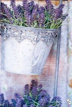Lavender ❤ ❤ ❤