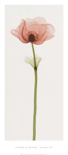 Flowers Under X-Ray - Buscar con Google