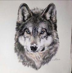 Amazing wolf drawing