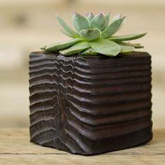 Succulent with Shou Sugi Ban Wood Planter Flow by HammerandBrush, $40.00
