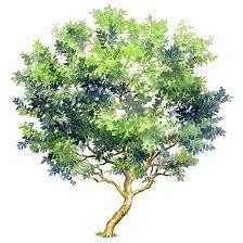 Afbeeldingsresultaat voor pinterest acuarelas arboles