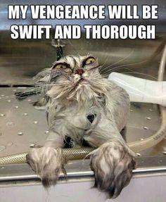 Revenge! #cat #humor #cats #funny =^..^= www.zazzle.com/kittyprettygifts