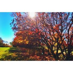 10.14.14 On the search for the perfect fall photo session locations #exploremn #onlyinmn #exploreeverything #wanderlust #fall2014 #autumn #minnesota  (at Despres Photography)