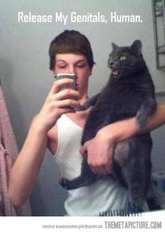 funny-black-cat-mirror-photo.jpg (399×564)