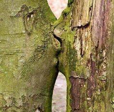 Duas árvores flertando, se beijando...copulando !!!