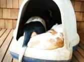 Makes me smile every time I watch it! It's Just an Ordinary Dog House Until You See What Comes Out!