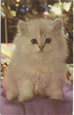 Sweet little White #Kitten Lil Button Eyes #Vintage #Postcard White Cat White…