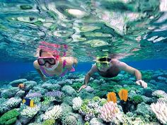 Book your adventure - Spend the day snorkeling Caribbean coral reefs on an excursion to Catalina Island from Punta Cana. Experience a snorkeling wonderland at 'The Wall' drop-off, one of the Dominican Republic's most beautiful dive sites, renowned f Puerto Morelos, Great Barrier Reef, Snorkeling, Laos, 7 Natural Wonders, Cuba Beaches, Sandy Beaches, Con Dao, Andaman And Nicobar Islands