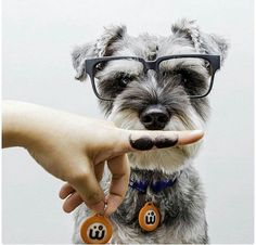 Image result for Schnauzer Butler Table