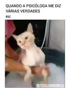 ✔ Memes Humor Videos The Internet Funny Grumpy Cat Memes, Funny Animal Memes, Animal Quotes, Funny Cats, Funny Animals, Cute Animals, Funny Memes, Animal Humor, Funny Shit