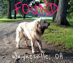 #FOUNDdog 7-29-15 LOOSE #Waynesville #OH #GreatPyrenees M AUTUMN CLARK LOST & FOUND OHIO PETS https://www.facebook.com/photo.php?fbid=10204841148491640&set=o.336811509753554&type=1