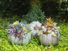 Succulent Pumpkins for the Garden | DIY Network Blog: Made + Remade >> http://www.diynetwork.com/made-and-remade/make-it/fall-outdoor-decorating-ideas?soc=pinterest