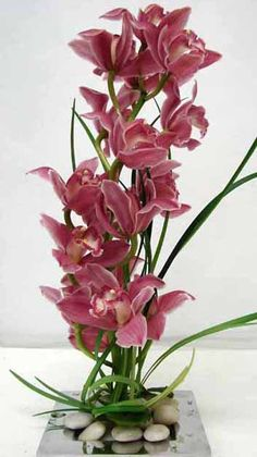 This is an arrangement featuring pink cymbidium orchids.  See our entire selection at www.starflor.com.  To purchase any of our floral selections, as gifts or décor, please call us at 800.520.8999 or visit our e-commerce portal at www.Starbrightnyc.com. This composition of flowers is generally available for same day delivery in New York City (NYC). OR005