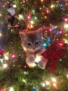 If I fits, I sits.. holiday edition. - Imgur