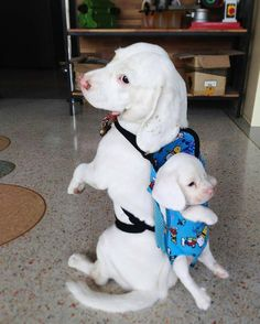 "awwww-cute: ""We are ready for the journey. (Source: http://ift.tt/2dxFWD1) """