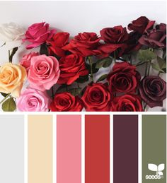 THIS IS PERFECT FOR OPIUM  FIELDS, ROSE RED,  PINK LEMONADE, HUNTER GREEN, WHITE