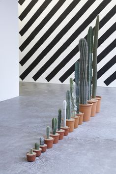 Work No. 960, by Martin Creed. They're cacti.