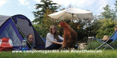 #camping #travel #worldwide #chickens - well why not? Find your Henny-Penny at http://campinmygarden.com