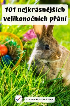 Animals, Easter, Spring, Animales, Animaux, Easter Activities, Animal, Animais